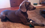 Post image for Dog Injury: Keeping Your Dog Mentally Active