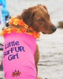 Post image for Surf Dog Ricochet – Be The Change