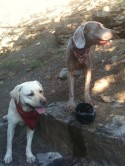 Post image for Dog Hydration:  How Much Water Should My Active Dog Drink?