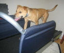 Post image for Exercise:  What To Do When Your Dog Is Not Getting Enough