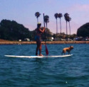 Post image for Water Sports Training with Your Dog