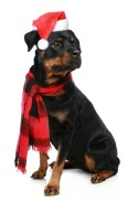 Post image for Holiday Dog San Diego Events