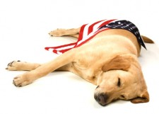Post image for 4th of July Dogs in San Diego