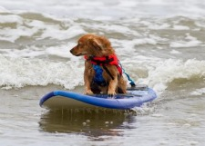 Post image for Hero Dog Awards and San Diego's Surf Dog Ricochet